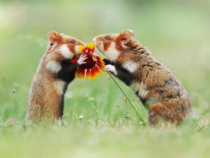 Animais silvestres esquilos com flores