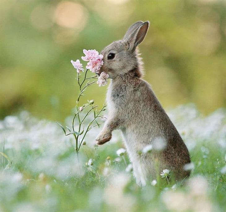 Animais silvestres coelhinho e flores