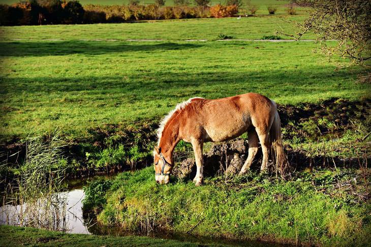 parábola cavalo