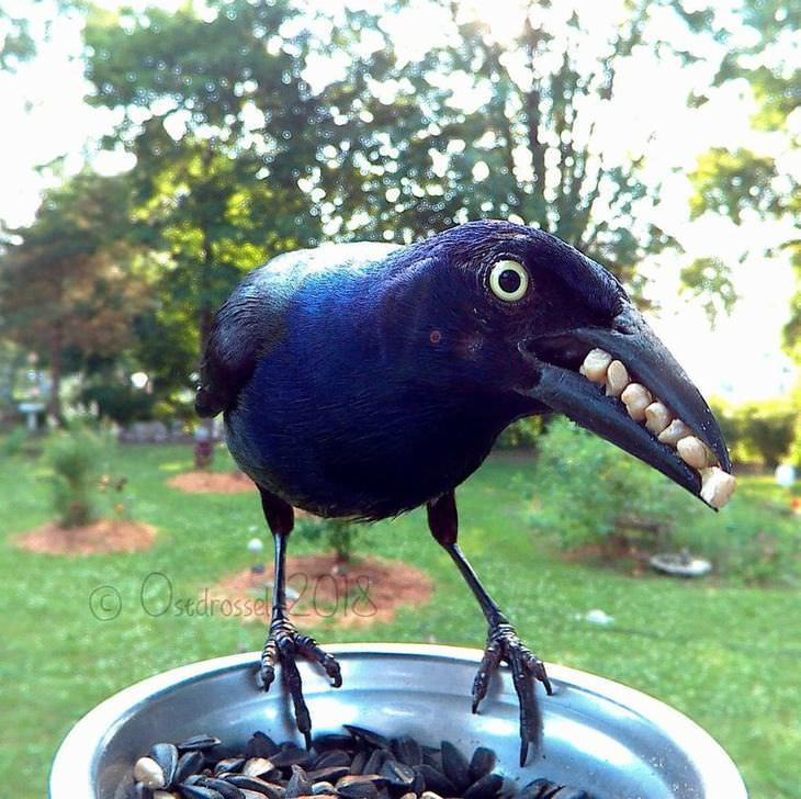 fotos de pássaros