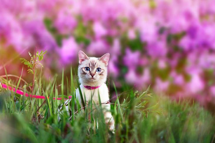 afaste gatos
