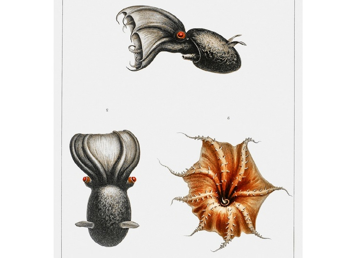 criaturas marítimas