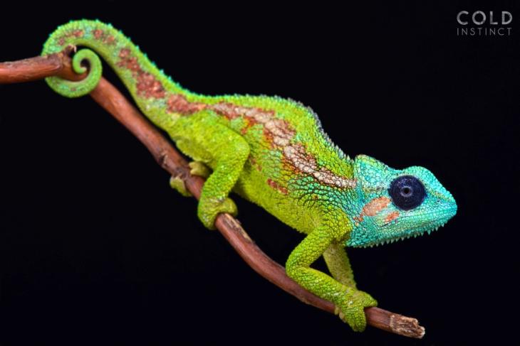 animais coloridos