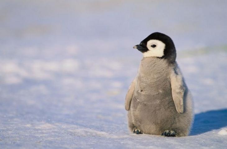 animais polares