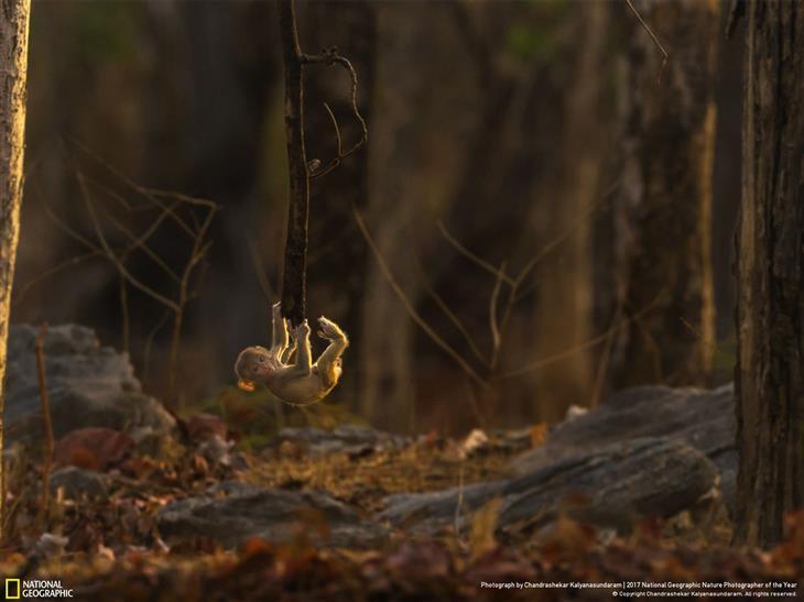 natureza fotografada