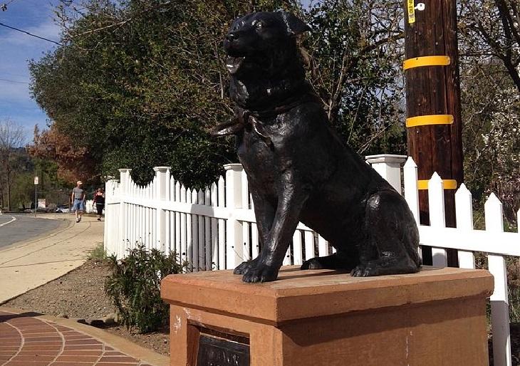 Dogs working: mayor dog