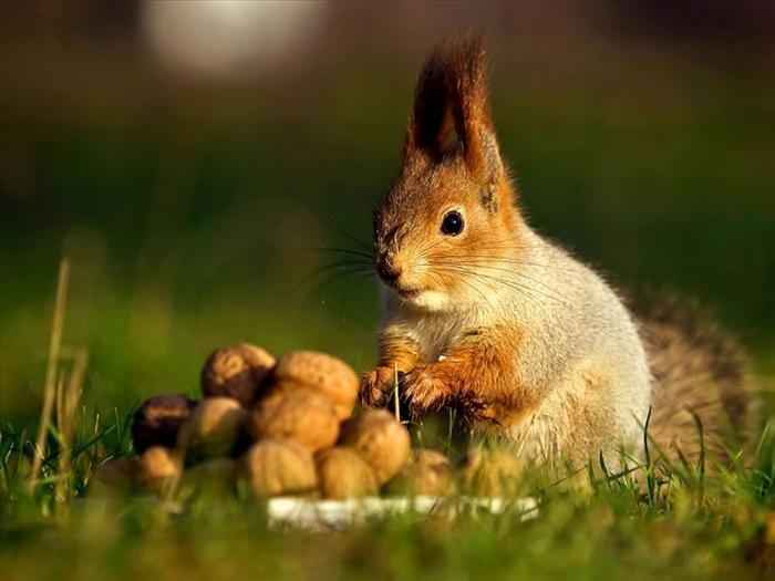 mundo dos esquilos