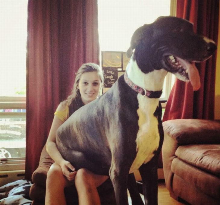 cães enormes