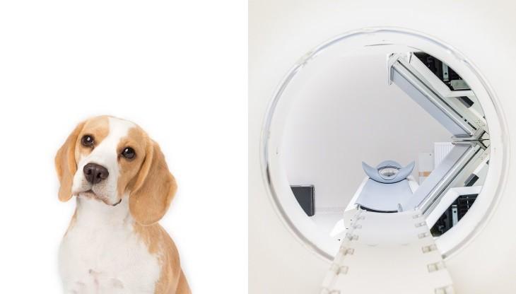 cães que detectam doenças