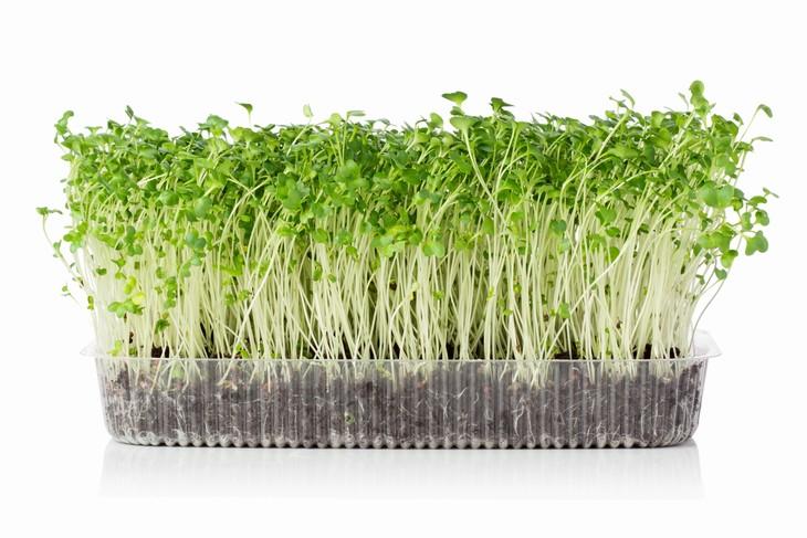 cultivo caseiro