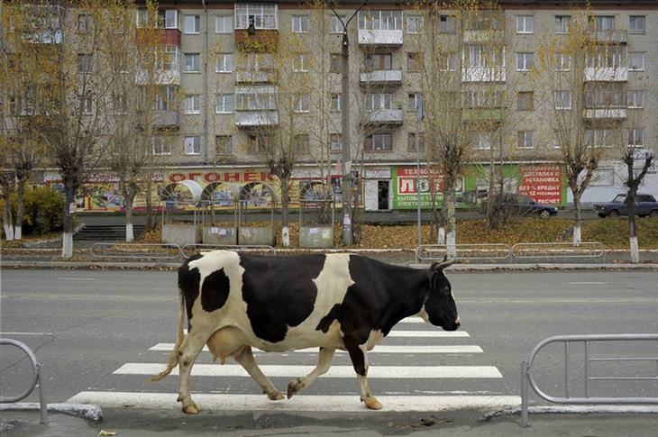 fotos russas