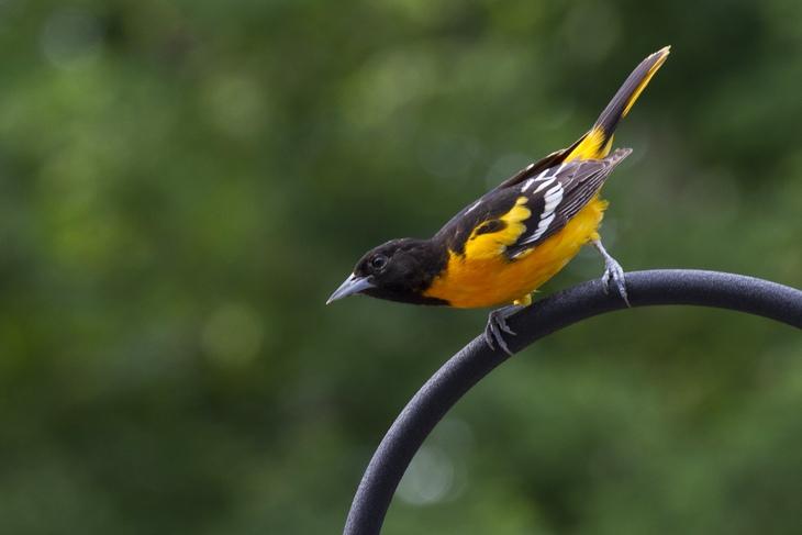Lindos pássaros