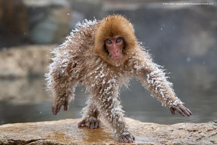 Bichos Também se Divertem - macaco na neve