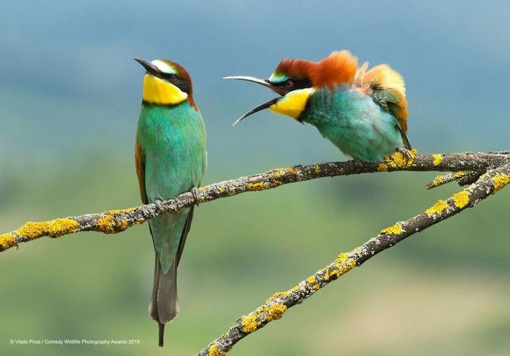 Bichos Também se Divertem - 2 passarinhos