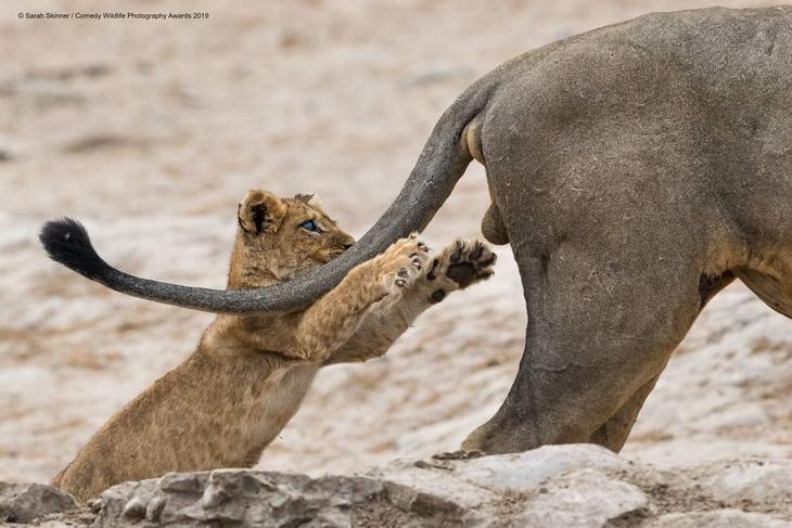 Bichos Também se Divertem - leãozinho
