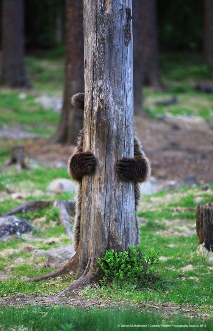 Bichos Também se Divertem - ursinho