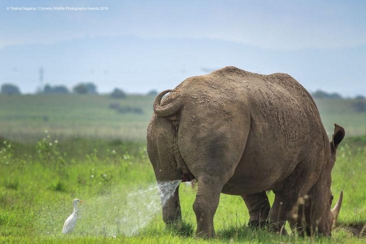 Bichos Também se Divertem - rinoceronte e passarinho