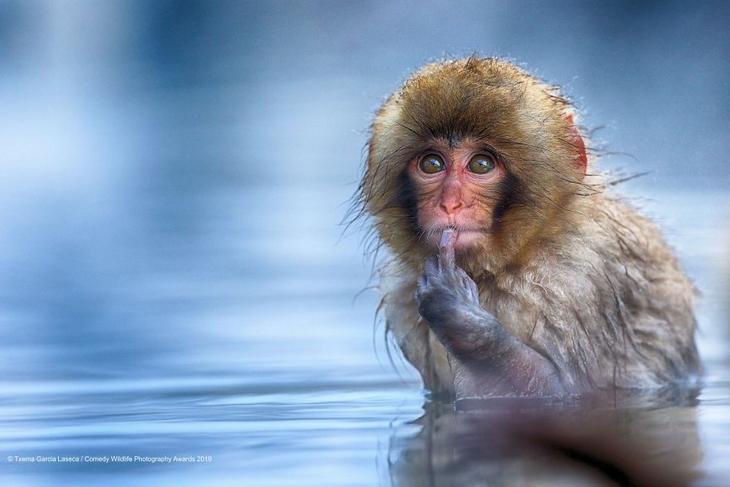 Bichos Também se Divertem - macaco pensando