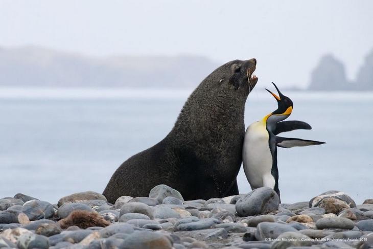 Bichos Também se Divertem - leão marinho e pinguim imperador