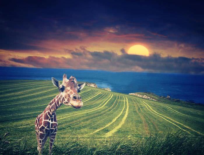 Mississipi em imagens de iPhone - girafa