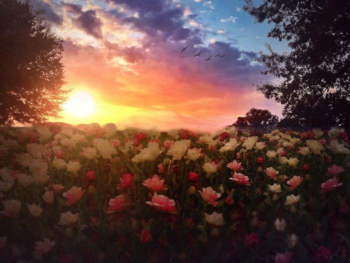 Mississipi em imagens de iPhone - roseiral