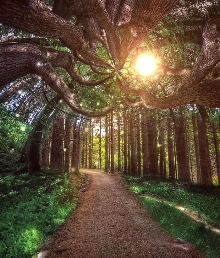 Mississipi em imagens de iPhone - bosque