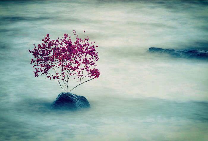 Mississipi em imagens de iPhone árvore entre brumas