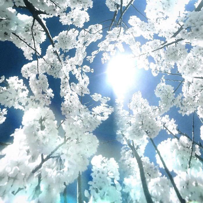 Mississipi em imagens de iPhone - flores brancas