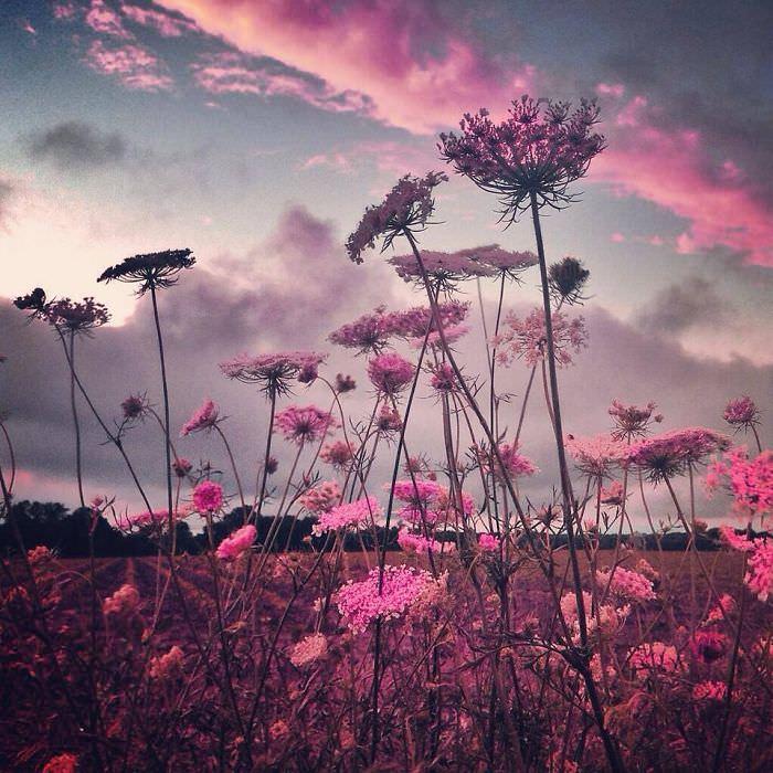 Mississipi em imagens de iPhone  céu pink