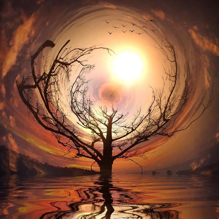 Mississipi em imagens de iPhone - árvore fantástica