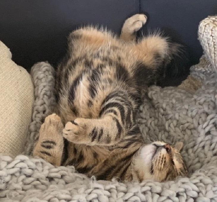 Gatinhos Muito Fofos - gatinho malhado