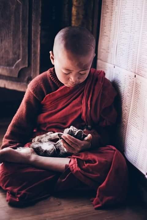 Crianças de Várias Culturas-pequeno monge com gatinho