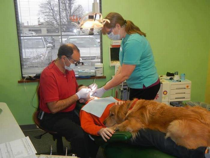 Cachorros com Trabalho de Gente cão no dentista