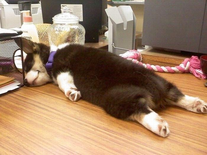 Cachorros com Trabalho de Gente - cão dormindo