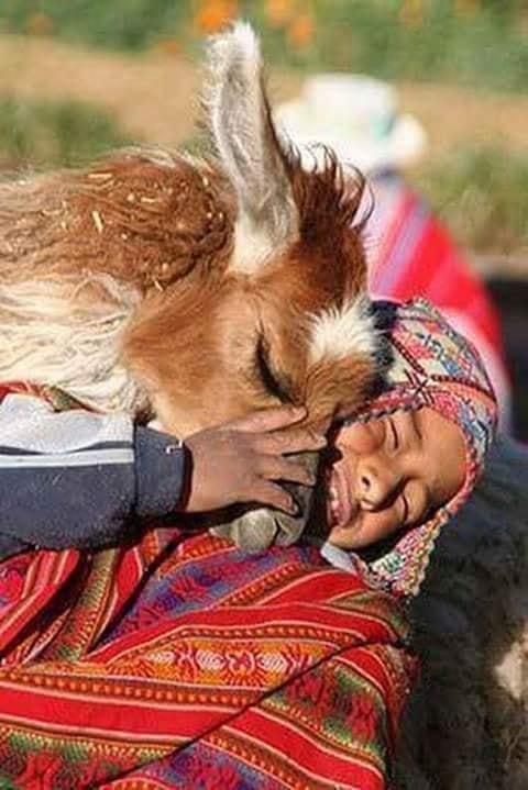 Crianças de Várias Culturas-menino andino com alpaca