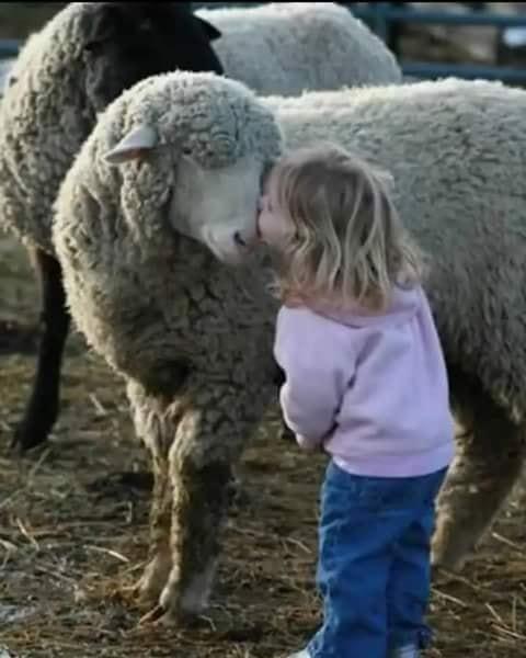 Crianças de Várias Culturas-menina com ovelha