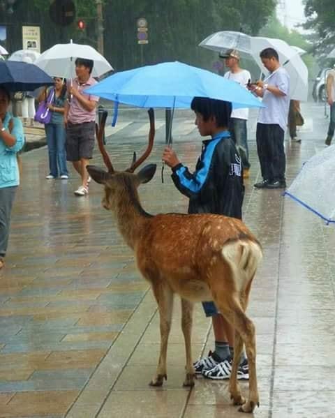 Crianças de Várias Culturas-garoto, guarda-chuva e bambi