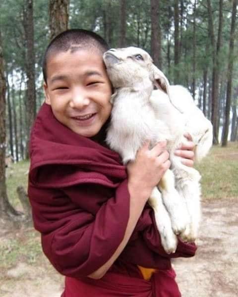 Crianças de Várias Culturas - pequeno monge com carneirinho