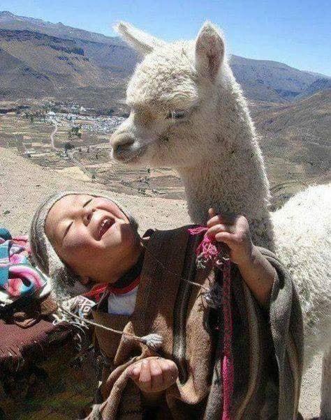 Crianças de Várias Culturas-garoto andino com lhama