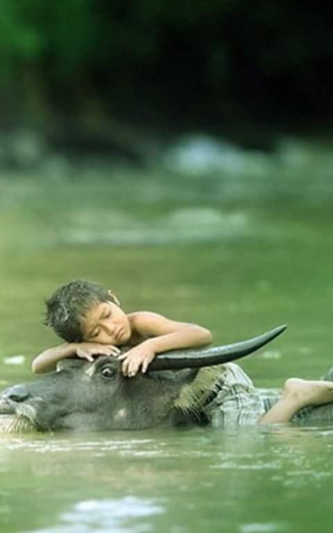 Crianças de Várias Culturas-garoto com búfalo d'água