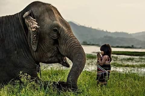 Crianças de Várias Culturas-menina com elefante