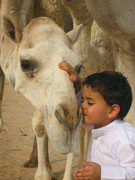 Crianças de Várias Culturas-menino com camelo