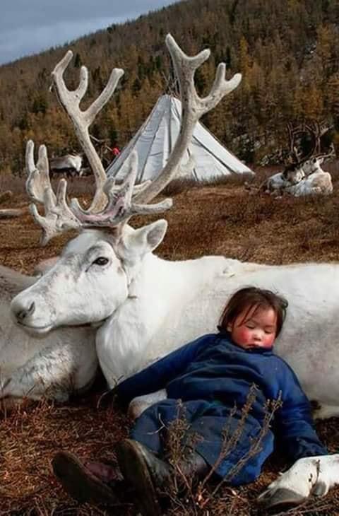 Crianças de Várias Culturas-criança adormecida com cervo adulto