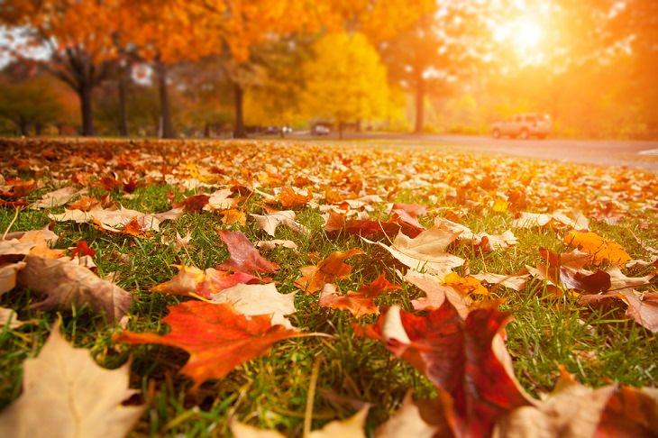 A origem dos nomes dos meses - outono