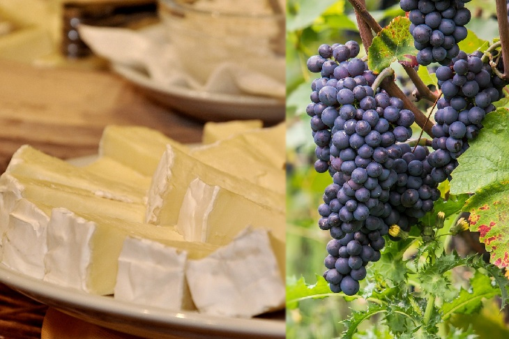 Como Combinar Perfeitamente Queijos e Vinhos - Brie e Pinot noir