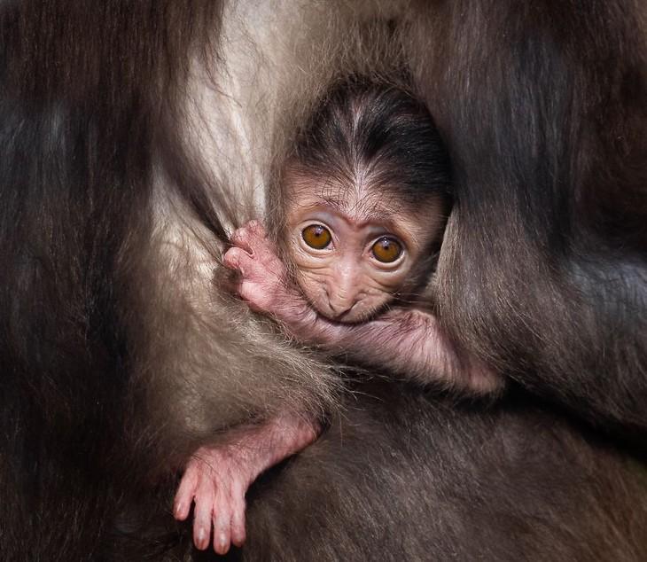 A impactante beleza dos animais selvagens macaquinho