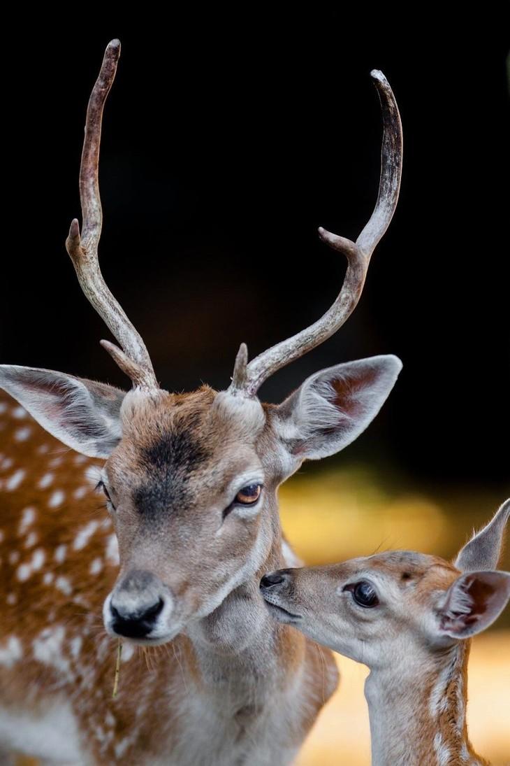 A impactante beleza dos animais selvagens - veado