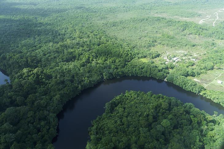 Guyanas, Um Paraíso no Caribe floresta tropical