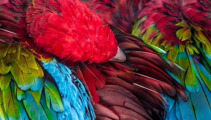 A impactante beleza dos animais selvagens - araras
