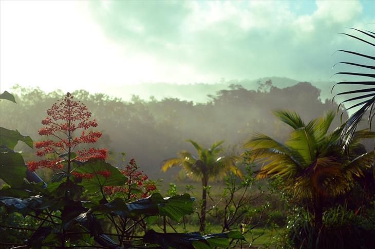 Guyanas, Um Paraíso no Caribe - floresta